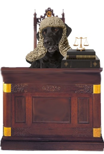 An image of Jet in a Judges wig sitting behind a desk with scales and law books on it