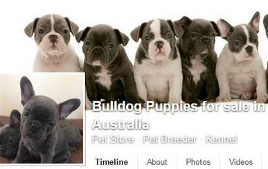 Facebook puppy scams