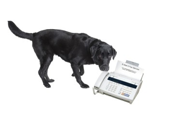 dog-with-fax