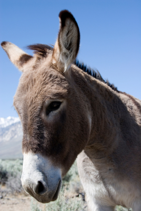 A mule looking sideways against a blue sky