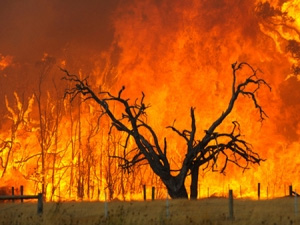 A black burnt tree in the middle of a bush fire, the rest of the image is completely engulfed in fire.