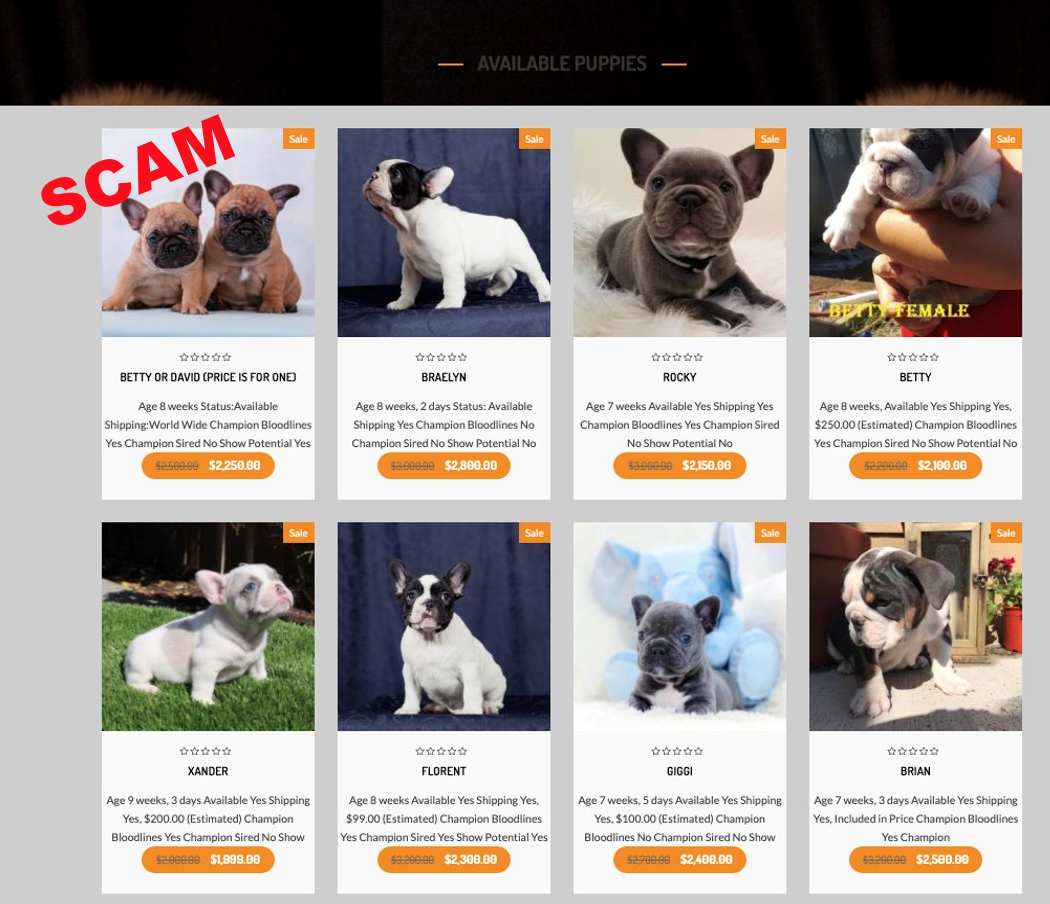 image of fake online puppy website