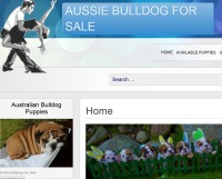 bulldog website aussie bulldogs