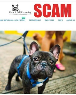 screenshot of fake webpage with french bull dog