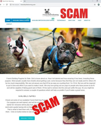 home page of fake french and british bulldog site