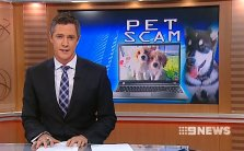 Pet scams - Ch 9 News (10/04/13)